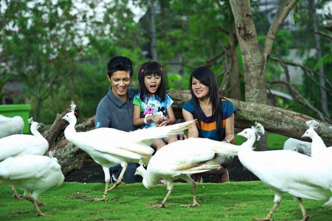 flamingo eco green park